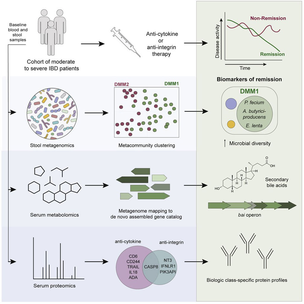 Multi-omics reveal microbial determinants impacting responses to biologic therapies in inflammatory bowel disease (Photo courtesy of Massachusetts General Hospital)