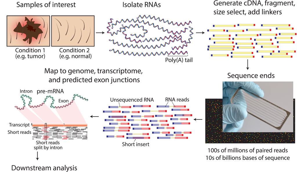 Typical RNA sequencing workflow (Photo courtesy of Wikimedia Commons)