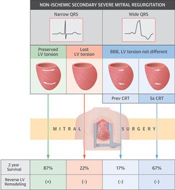 Image: A summary of the study (Photo courtesy of Yuichi Notomi / Hayama).