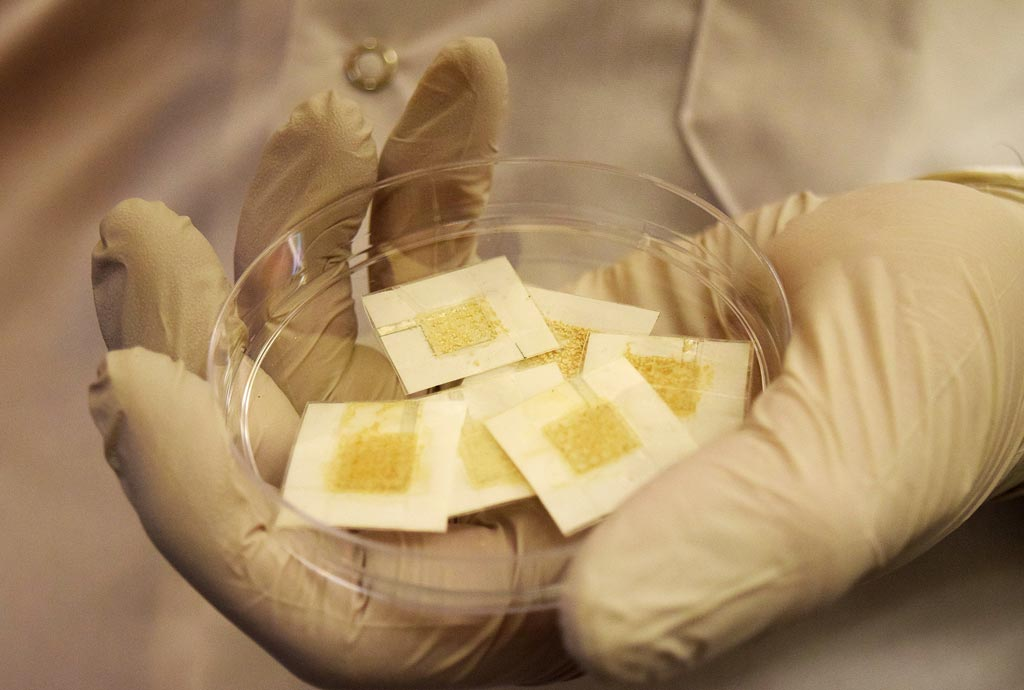 Image: Disposable yeast badges can detect radiation exposure (Photo courtesy of Kayla Wiles/ Purdue University).