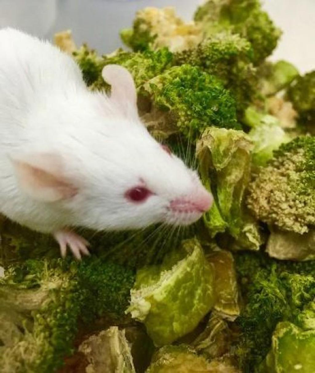 Image: Colorectal cancer was blocked in mice fed with a genetically engineered microbe and a cruciferous vegetable-rich diet (Photo courtesy of Dr. Chun-Loong Ho, National University of Singapore).