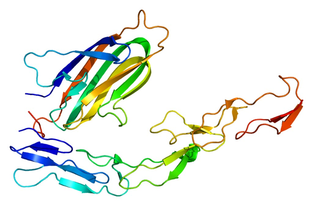 Image: The structure of the OX40 protein (Photo courtesy of Wikimedia Commons).