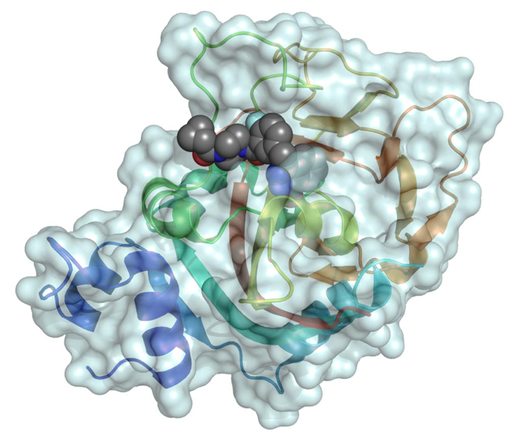 Image: A mixed surface–ribbon representation of the catalytic domain of human poly (ADP-ribose) polymerase 1 (PARP1) binding the small-molecule inhibitor olaparib (shown as a space-filling model) (Photo courtesy of Wikimedia Commons).