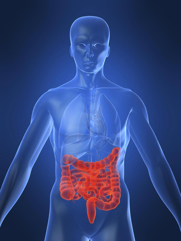 图片:一项研究的目的是开发更好的克罗恩病血液检验,也许有助于诊断、理解和治疗克罗恩病(图片蒙亚利桑那州立大学生物设计研究所惠赐)。