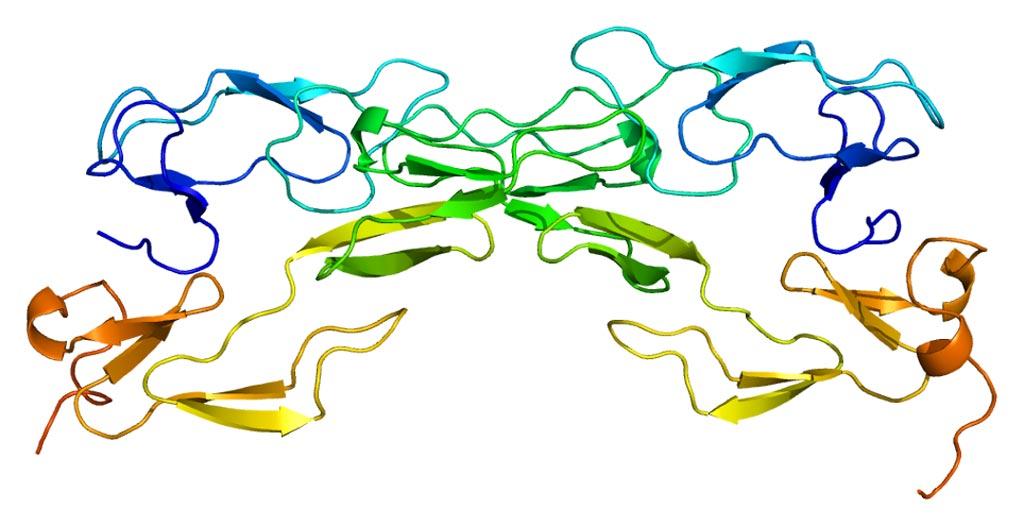 图片:肿瘤坏死因子受体1蛋白质的结构(照片由Wikimedia Commons提供).