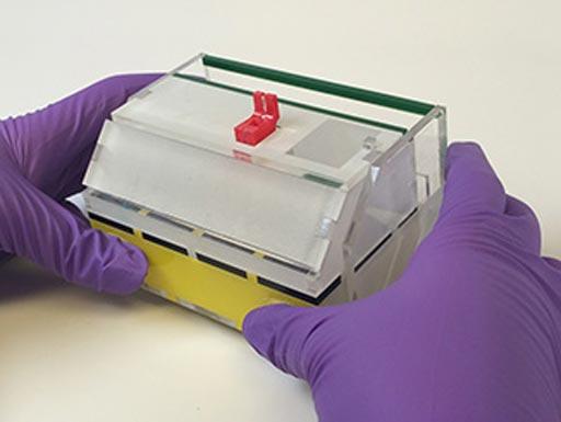 图片:科学家正在开发一种一次性POC流感检测器,在大约35分钟内可得出可视结果(照片由American Chemical Society提供)。