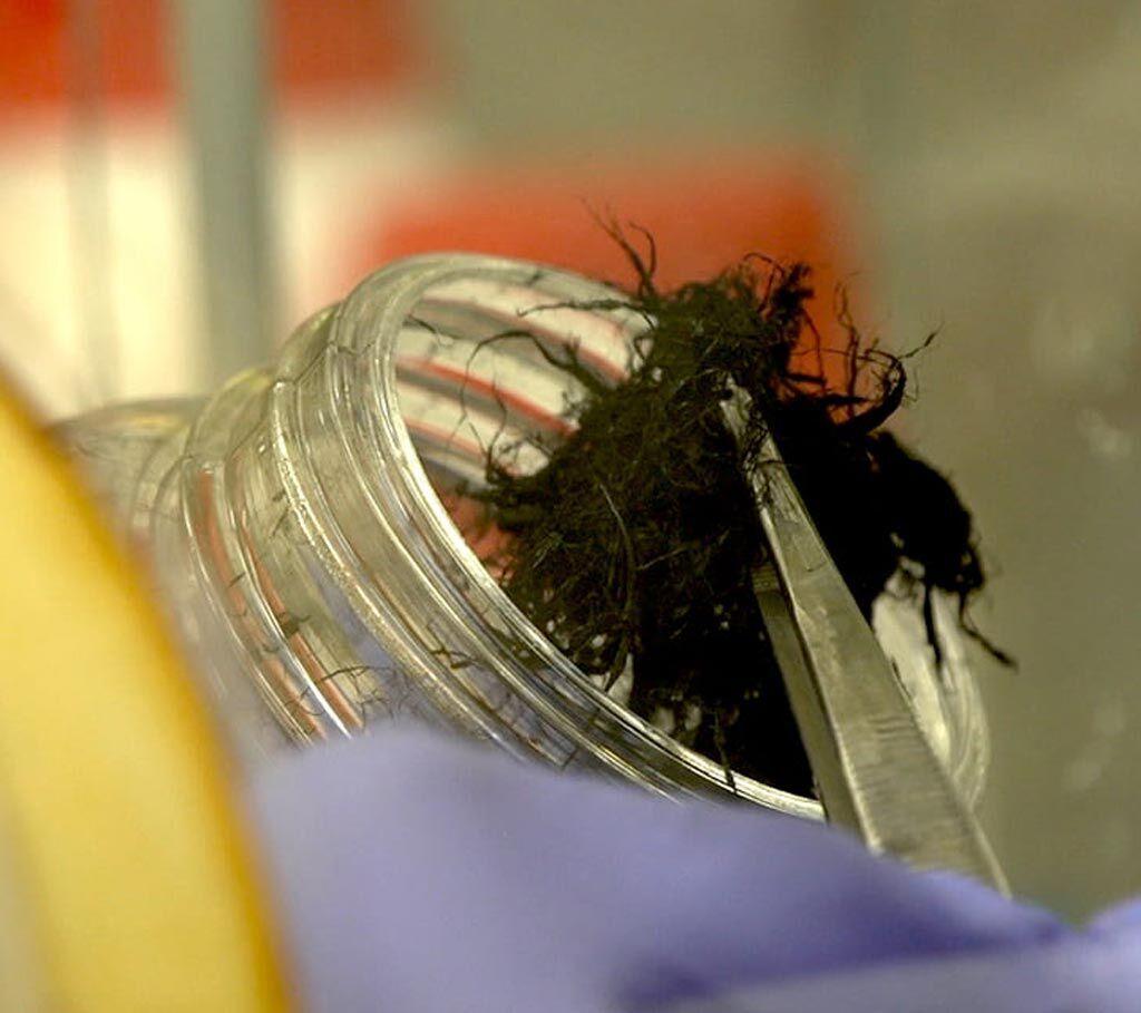 Imagen: Un lote de NTC antes de ser cosidos en las suturas (Fotografía cortesía de la Universidad de Rice).