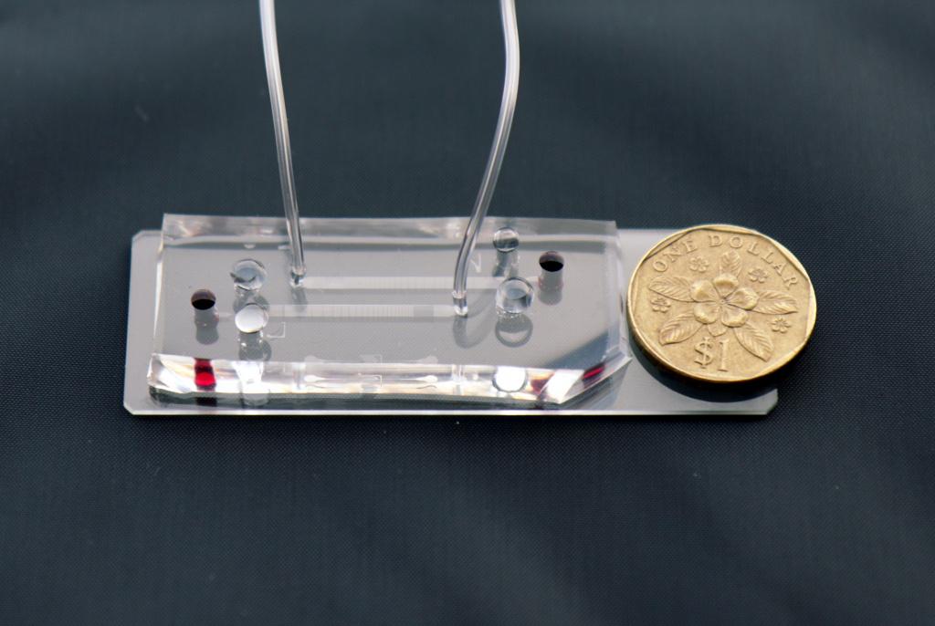 Imagen: Un primer plano del chip de ensayo de micro-fluidos DLD con la moneda de 1 dólar de Singapur para la escala (Fotografía cortesía de la Alianza de Investigación y Tecnología de Singapur-MIT)