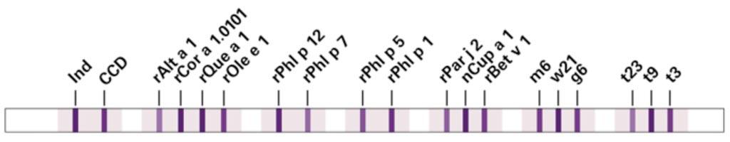 Imagen: Los anticuerpos IgE específicos contra alérgenos por inhalación que ocurren comúnmente en el sur de Europa pueden ser detectados y diferenciados usando la nueva técnica de inmunotransferencia multiparamétrica, EUROLINE DPA-Dx Polen Sur de Europa (Fotografía cortesía de EUROIMMUN).