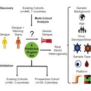 Imagen: Un diagrama del estudio del Conjunto de 20 Genes Predictivos de Progresión a Dengue Severo (Fotografía cortesía de la Facultad de Medicina de la Universidad de Stanford).