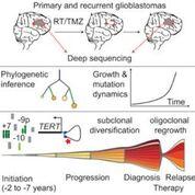 Imagen: Un diagrama de las trayectorias evolutivas de los glioblastomas IDH-WT que revelan una ruta común de tumorigénesis temprana instigada años antes del diagnóstico inicial (Fotografía cortesía del Centro Alemán de Investigación del Cáncer).