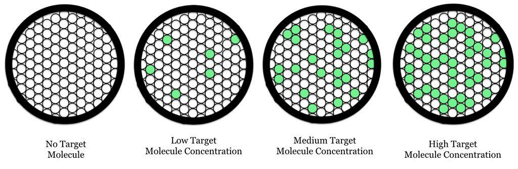 Imagen: PCR digital por gotitas (ddPCR): esquema que muestra gotitas de aceite que contienen moléculas fluorescentes diana de PCR (Fotografía cortesía de Wikimedia Commons)