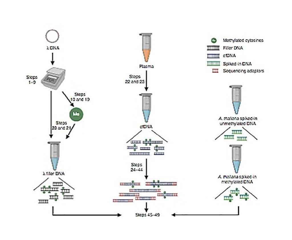 Imagen: Diagrama esquemático de inmunoprecipitación de ADN metilado libre de células y secuenciación de alto rendimiento (cfMeDIP-seq) (Fotografía cortesía del Centro de Cáncer Princesa Margarita).