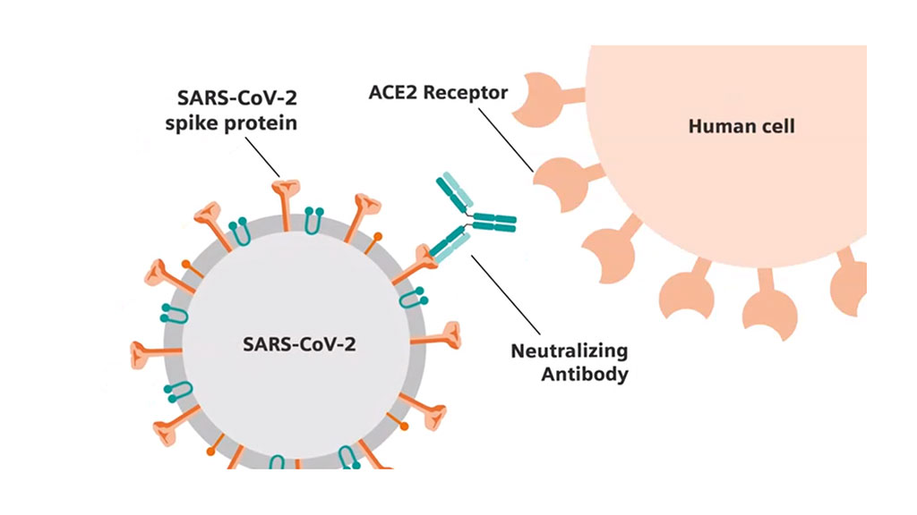 Image: Siemens' collaboration with the CDC and the JRC will develop a novel process for standardizing SARS-CoV-2 assays by anchoring each protein to a neutralization antibody titer - a level of antibody present to block virus from entering cells in laboratory experiments (Photo courtesy of Siemens Healthineers)