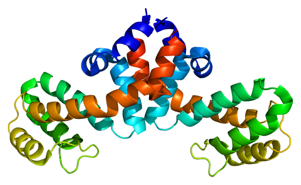 Structure of the RGS1 protein (Photo courtesy of Wikimedia Commons)