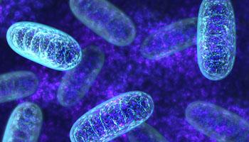 Митохондрии. Исследователи обнаружили наследственные мутации в гене TMEM126B, которые вызывают тяжело протекающее и часто смертельное заболевание у детей грудного возраста, и разработали диагностический экспресс-тест, который уже позволил обнаружить 6 больных людей из 4 семей (фото любезно предоставлено Университетом Ньюкасла).