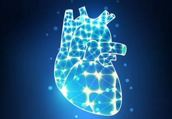 Открытие того факта, что мутации гена титина также отрицательно влияют на функцию сердца у практически здоровых людей, позволяет предположить, что сердца таких людей могут быть обречены на недостаточность, если человек также страдает от второго сопутствующего состояния (фото любезно предоставлено Имперским колледжем Лондона).