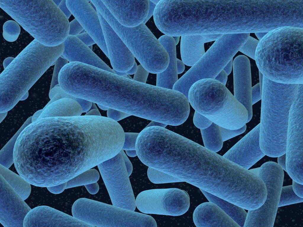 У беременных женщин бактерии Listeria monocytogenes могут вызвать самопроизвольный аборт на ранних сроках беременности, а также рождение мертвого плода и преждевременные роды (фото любезно предоставлено Центрами по контролю и профилактике заболеваний).