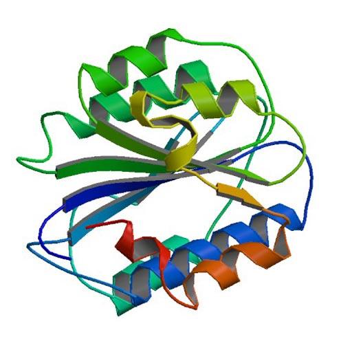 Ленточная модель фактора фон Виллебранда. Мутации в его гене могут вызвать наследственное заболевание крови - болезнь фон Виллебранда (фото любезно предоставлено ресурсом Викимедиа).