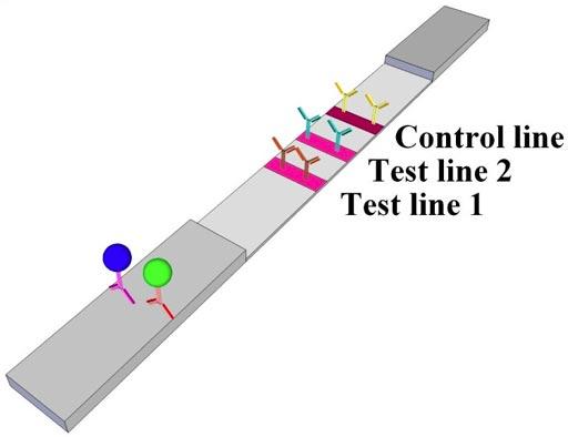 Анализ на бумажных тест-полосках мог бы помочь людям с сердечной недостаточностью узнать, ухудшается ли их состояние (фото любезно предоставлено Американским химическим обществом).