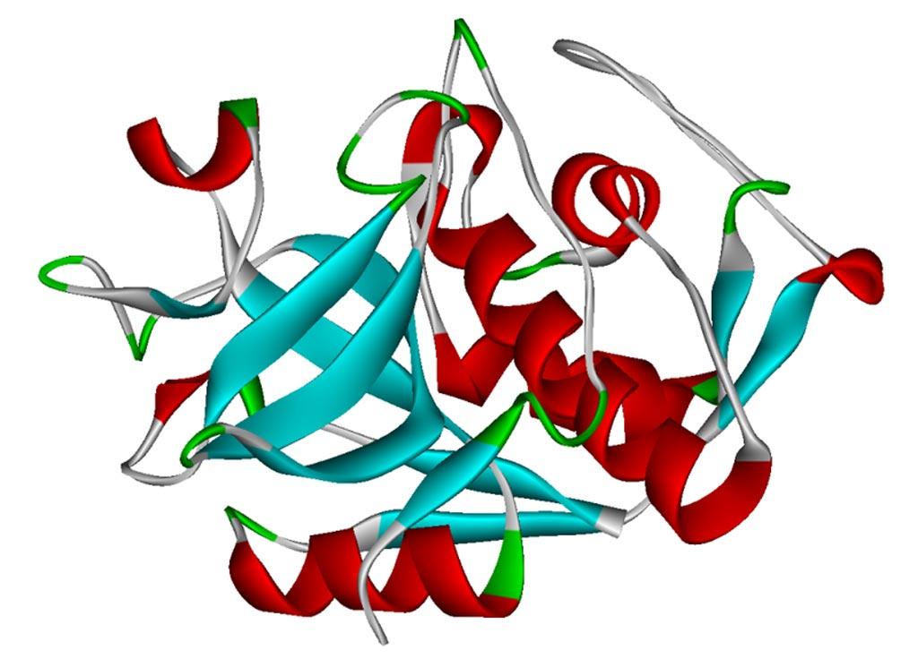 Ленточная диаграмма человеческого катепсина K, окрашивание на вторичной структуре  (фото предоставлено Wikimedia Commons).