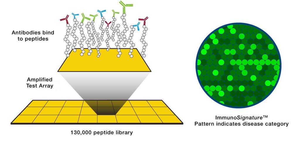 На рисунке схематично представлена технология ImmunoSignature (изображение любезно предоставлено HealthTell).