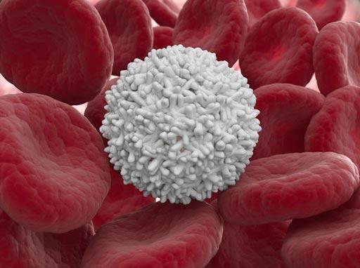 Лейкоцит среди эритроцитов (фото любезно предоставлено компанией HealthTap).