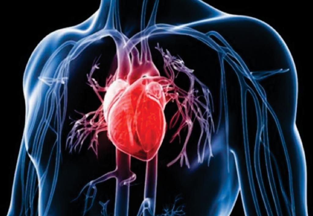 Изменения уровней фосфата в крови могут представлять риск для сердечно-сосудистого здоровья (фото любезно предоставлено доктором Стивом Петриком (Steve Petryk)).