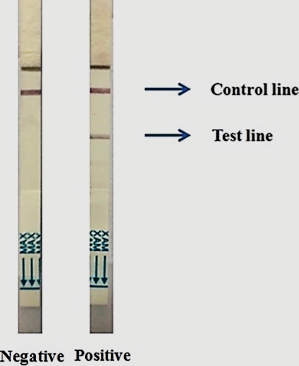 Две тест-полоски Cholkit, показывающие характерные отрицательные (левое изображение) и положительные (правое изображение) результаты после 15-минутного прогона образца (фото предоставлено Международным центром исследований диарейных заболеваний)