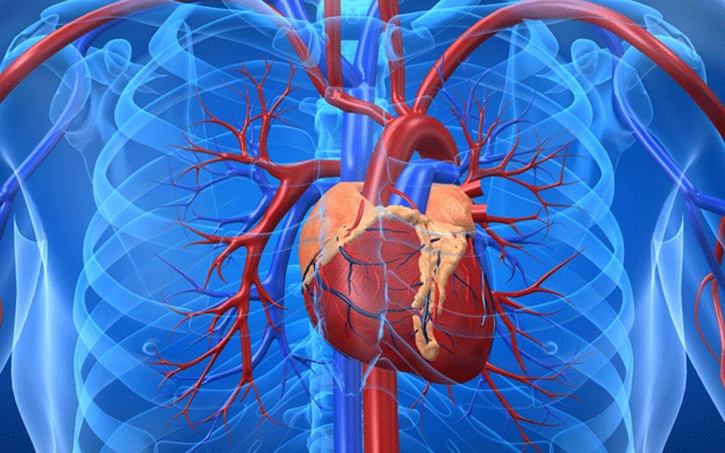 Новый анализ крови гарантирует практически мгновенную постановку диагноза сердечного приступа с использованием недавно открытого биомаркера белка (фото любезно предоставлено iStock).